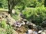 자작숲 아름드리 물소리 새소리따라 걷는 서후리숲산책,