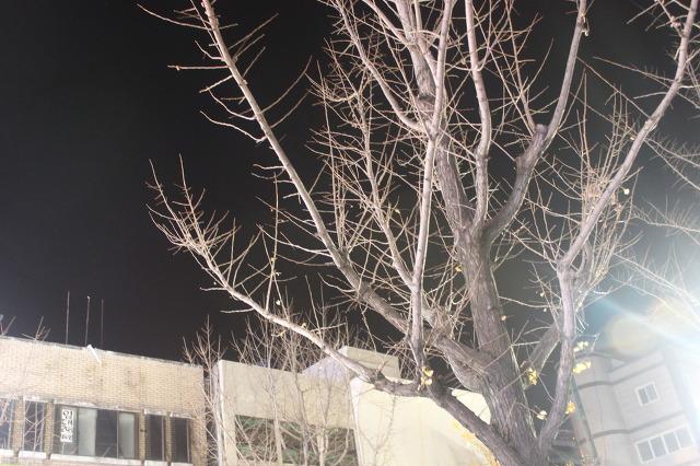 겨울나무처럼 시인도 살아 있네