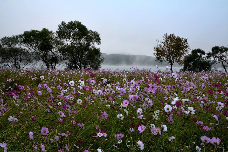 디카산책 - 안개 낀 남양주 '물의 정원' ②